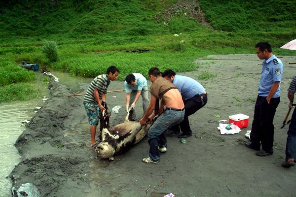解剖溺水男孩尸体解剖溺水美女尸体汶川泥石流死亡
