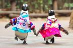 春节特辑:动物迎春