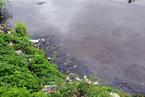 中央环保督察组:广东每天数百万吨污水直排环境