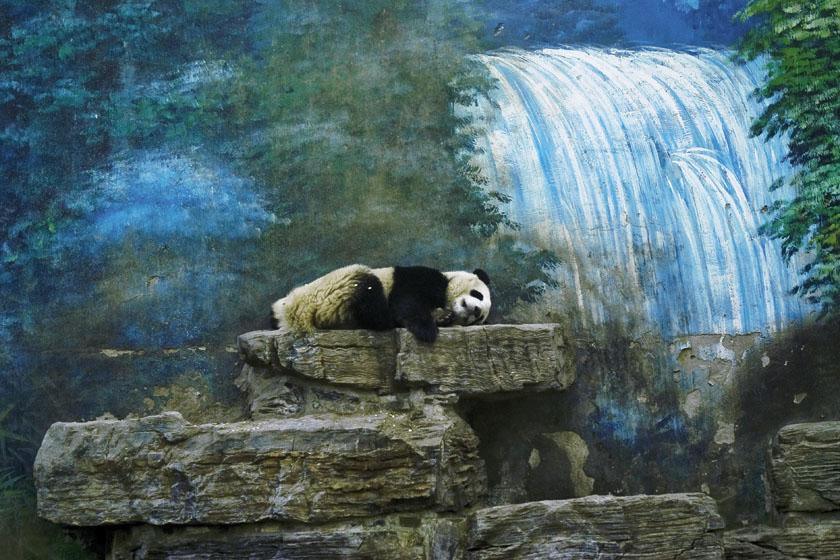 北京动物园的动物. 易建涛/摄_理想的风景