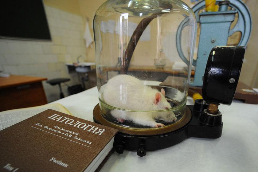 探秘小白鼠的实验室生活