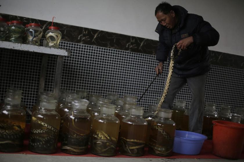 春节特辑:探秘中国第一蛇村_图片频道_财新网