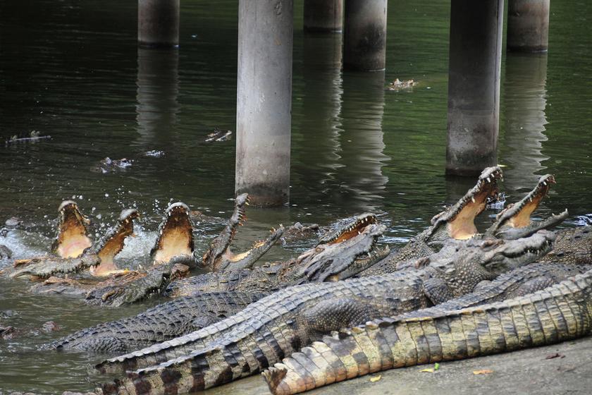 广州鳄鱼公园地址_广州鳄鱼公园是长隆集团精心打造的又一大型主