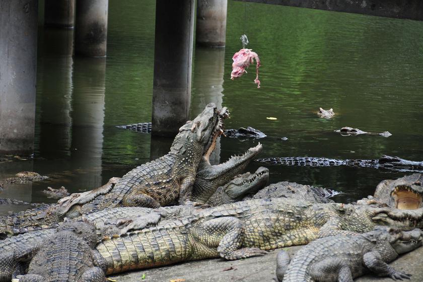 广州鳄鱼公园地址_广州鳄鱼公园风景图片