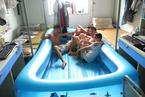 """大学生寝室装""""游泳池""""避暑"""