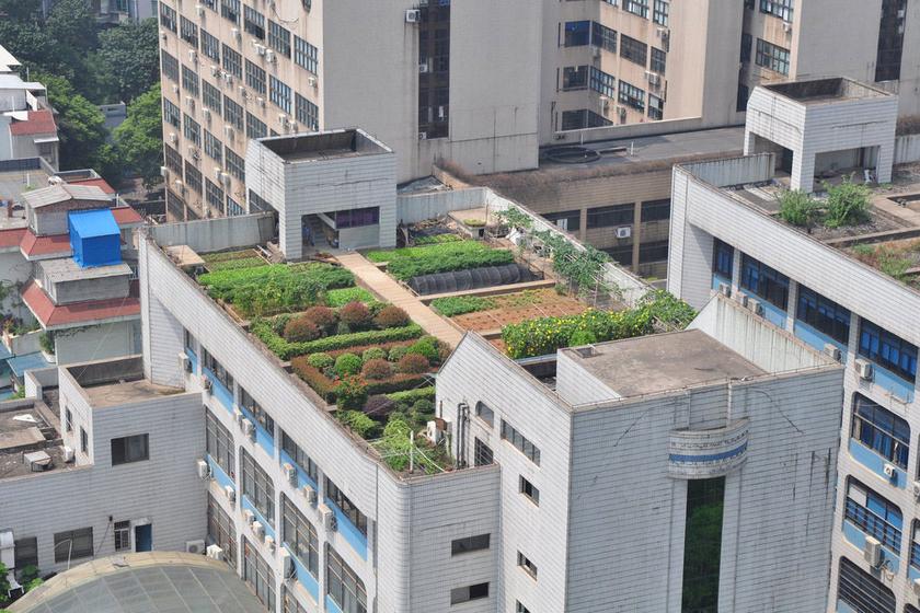 """长沙一高楼楼顶现""""空中菜园"""""""