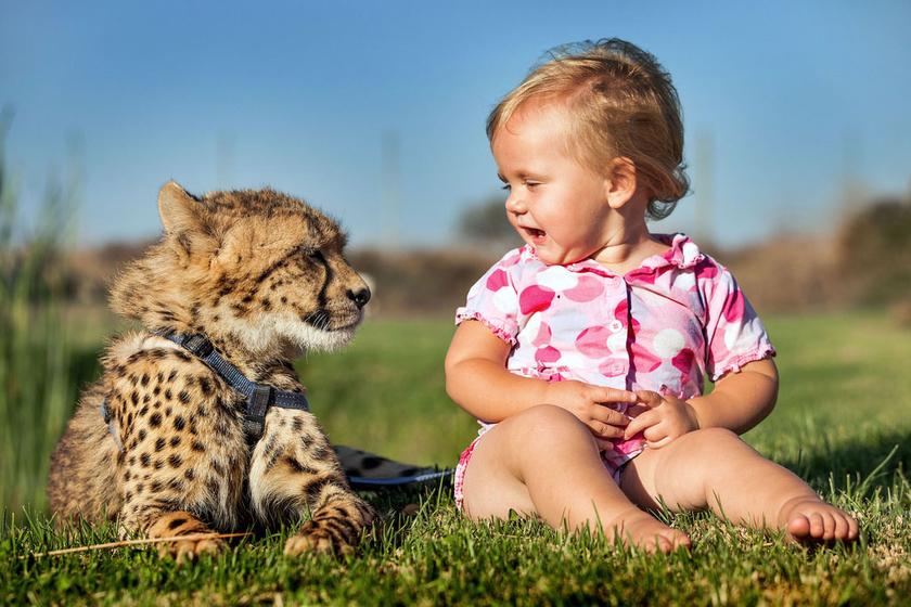 小孩识动物图片