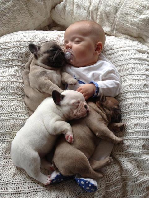 2013年5月21日报道,一组小宝宝和小斗牛犬相拥而眠的照片风靡网络.