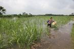 盘前必读:《农田水利条例》7月施行