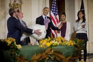 感恩节前奥巴马赦免火鸡