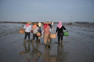 泉州养殖基地油蛤遭近2000人抢挖