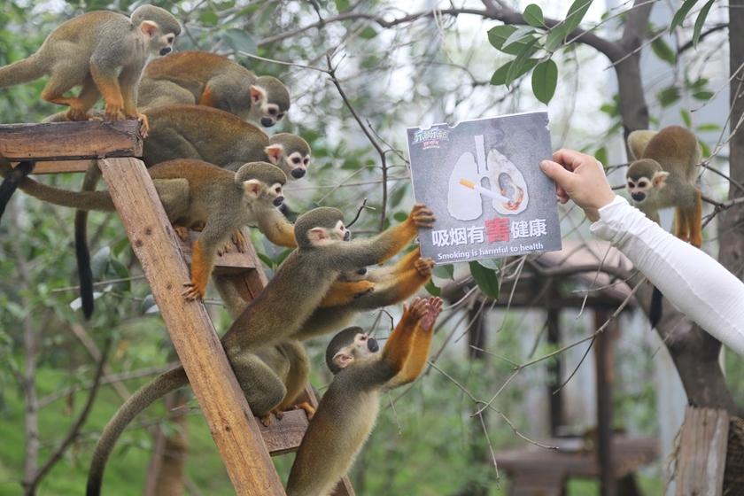 重庆动物世界小动物举牌 呼应世界无烟日