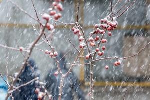 气温骤降 北京迎鸡年首场降雪