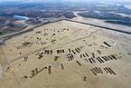 成都春秋战国船棺墓群出土大量青铜器 堪称宝库