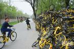 """北京:小黄车""""尸体""""堆积如山 覆盖长度达3百米"""