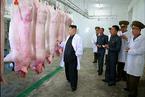 金正恩视察养猪厂 强调军队后勤保障自给自足