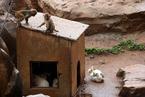 """昆明动物园猴山遭鼠灾 猴食被盗请""""猫保安"""""""