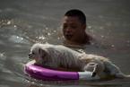 长江水位超警戒线 武汉市民江边戏水