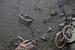 上海一小河清污 现多辆共享单车横'尸'河底