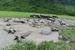 湖北恩施山区100多头水牛共洗泥巴浴去暑热