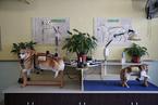 一诊所为宠物做针灸艾熏 4年治疗2000只猫狗