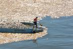 台北持续高温致基隆河现大面积死鱼
