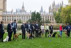 """英国议员携爱犬参加""""威斯敏斯特年度狗狗""""大赛"""