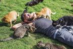 夏威夷有个猫岛 这才是猫咪真正的天堂