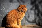 """镜头下的故宫""""网红猫"""""""