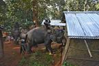 """印度警方""""雇用""""大象当拆迁工 清理非法居住区"""