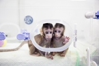 两只克隆猴在中国诞生