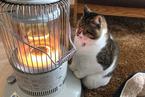 日本萌猫烤火日常吸粉无数 守护暖炉寸步不离