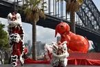 喜迎中国农历新年 悉尼庆典活动开始倒计时