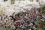 南京鸡鸣寺樱花盛开 游人如织