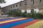 安徽泗县被伐树木倒向幼儿园 导致女童一死两伤