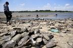 哈尔滨松花江现罕见低水位 河床裸露河蚌堆积