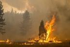 美加州野火持续蔓延 过火面积破纪录