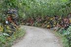 南京一山路两侧堆满共享单车 车辆被荒草吞没