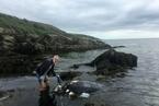 英国百年野生海龟被发现 漂浮海上似船只