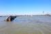 长江定易洲锚地发生船舶碰撞事故 3船沉没4人失踪
