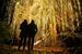 德国柏林植物园举行灯光秀 百万彩灯装点夜空