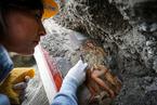 庞贝古城发现罕见壁画 描绘古希腊神话场景