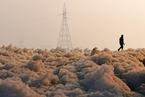 印度雅沐拿河遭污染现有毒泡沫