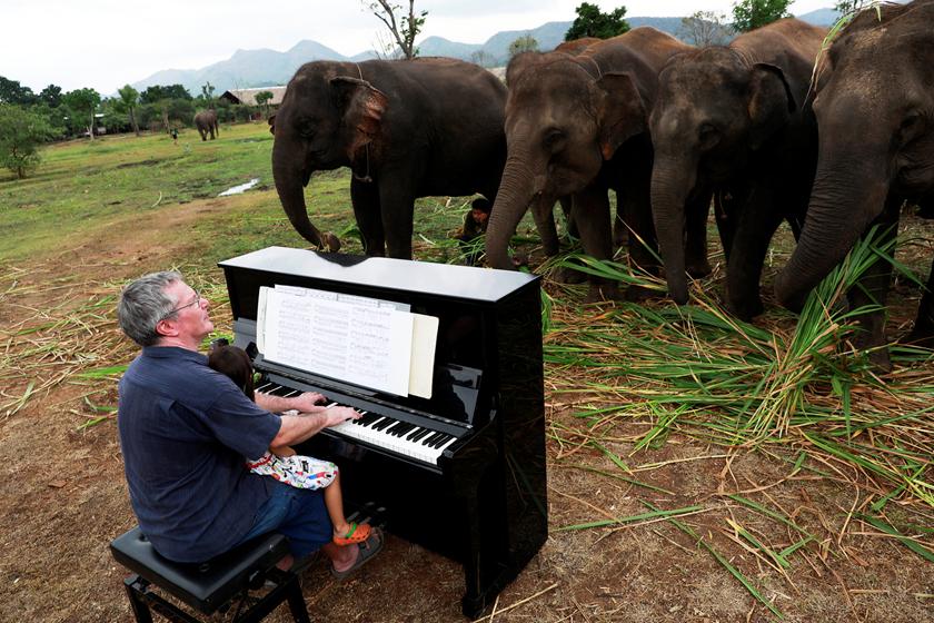 英国钢琴家走进大象庇护所 为退休大象弹奏音乐