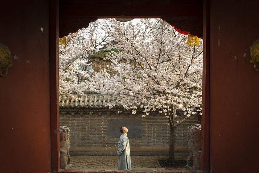 樱花季来临 民众纷纷出行踏春赏樱