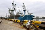 日本正式退出国际捕鲸委员会 今日重启商业捕鲸