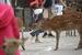奈良鹿误食塑料接连死亡 那些被垃圾围困的动物