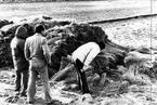 《杀人回忆》凶手原型被找到 30年前老照片曝光