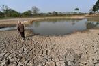 安徽多地遇旱災 部分糧田絕收水塘見底
