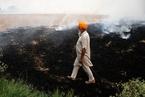 印度大量焚燒秸稈 空氣污染加劇